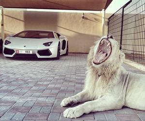 luxury, lion, and animal image