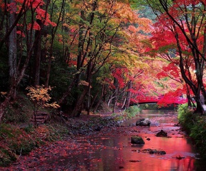 nature, tree, and japan image