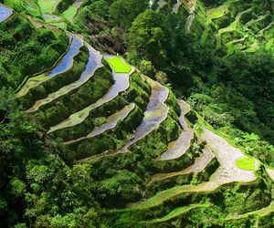 green and Philippines image