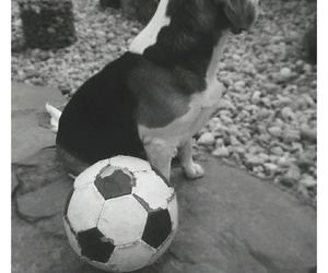 ball, football, and white image