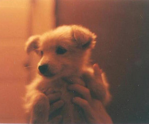cute, dog, and vintage image