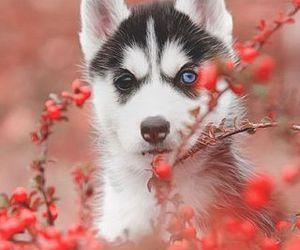 dog, eyes, and puppy image