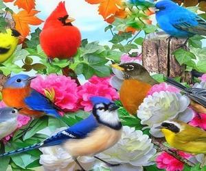 biautiful colors birds image