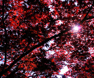nature and red image
