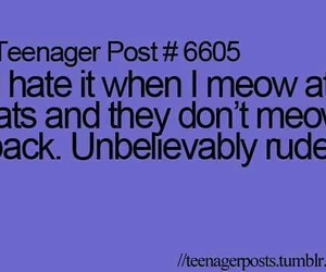 cat, funny, and teenager post image