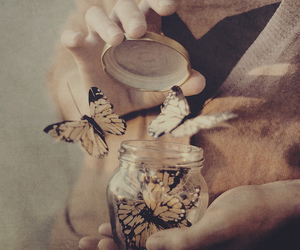 butterfly, caged, and glass image