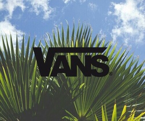 palms and vans image