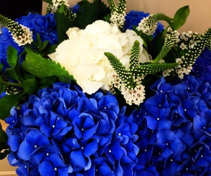 blue, flowers, and love image
