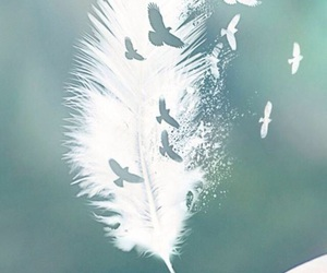 feather, birds, and wallpaper image