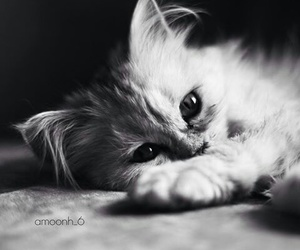 animals, kitten, and photography image