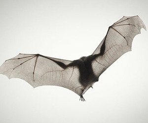 bat, fly, and wings image