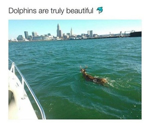 funny, lol, and dolphins image
