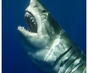 beautiful, fish, and jaws image