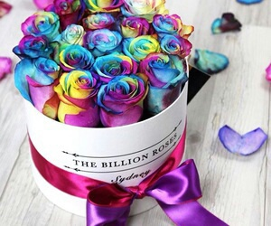 roses, flowers, and rainbow image