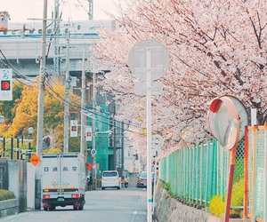 japan, pink, and cherry blossom image