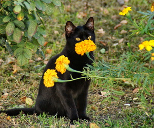 black cat, flores, and kitty image