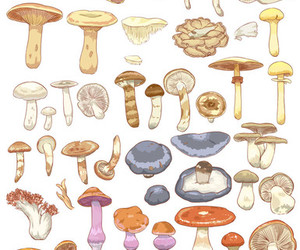 delicious, drawing, and mushroom image