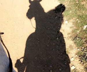horse, horse riding, and life image