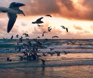 sea, ocean, and seagull image