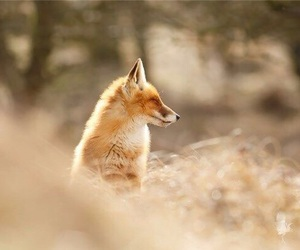 forest, fox, and nature image