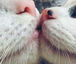 cat, love, and kiss image