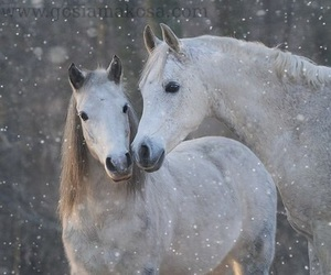 animals and horses image