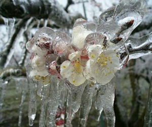 flowers, cold, and ice image