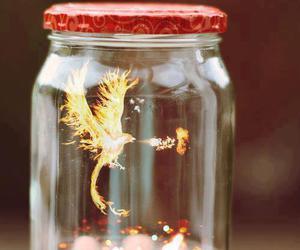 fire, phoenix, and bird image