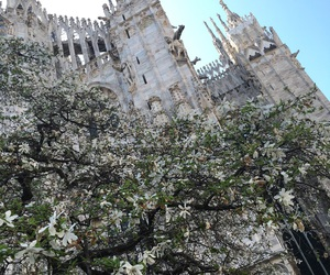 city, duomo, and flowers image