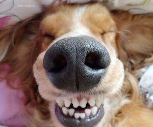 dog, smile, and funny image