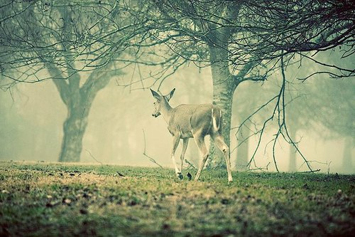 Observing Nature || DeeR