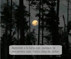 luna and brillo image