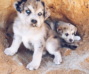 blue, dogs, and tumblr image
