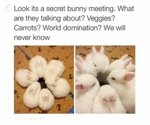 bunny, funny, and rabbit image