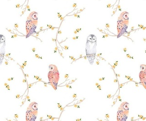 wallpaper, background, and owl image