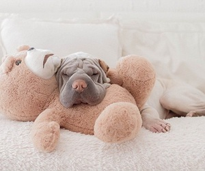 dog, shar pei, and perros image
