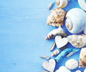 wallpaper, blue, and shell image