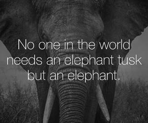 elephant, animals, and nature image