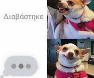 greek, dog, and facebook image