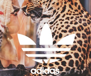 adidas and leopard image