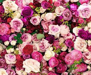 flowers, rose, and wallpaper image
