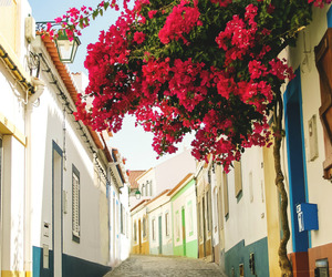 flowers, portugal, and travel image