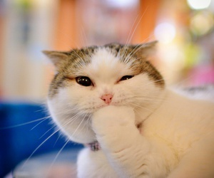 Animales and Gatos image