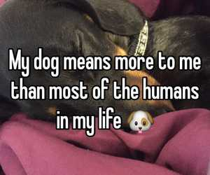 animals, dog, and quote image