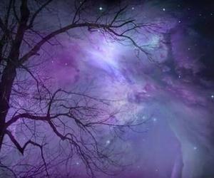 beautiful, tree, and stars image