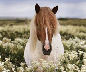 horse, flowers, and pony image