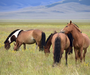 cheval, horse, and wild horse image