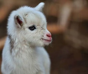 animal, baby, and cute image