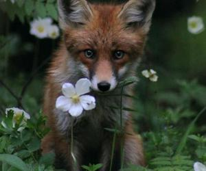 animal, flower, and pretty image