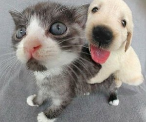 cute, cat, and dog image